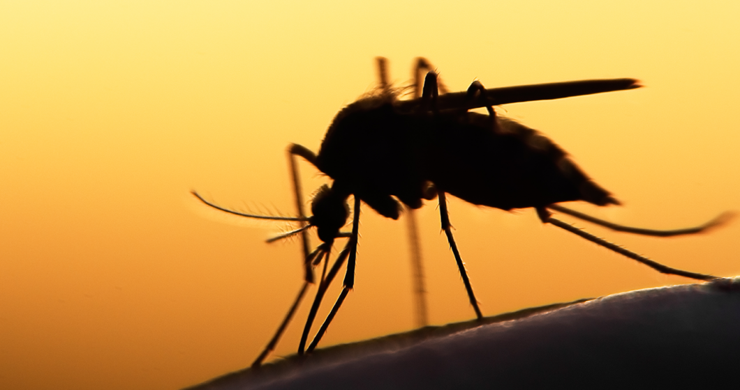 Survey gives the buzz on the best mozzie repellents